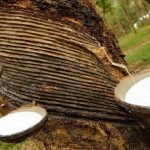 indonesia natural rubber supplier