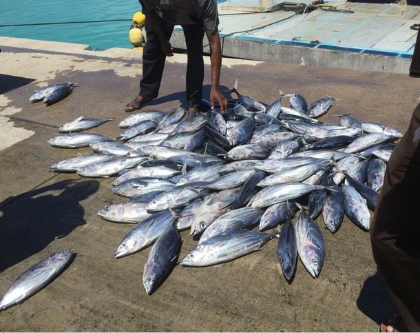 indonesia tuna